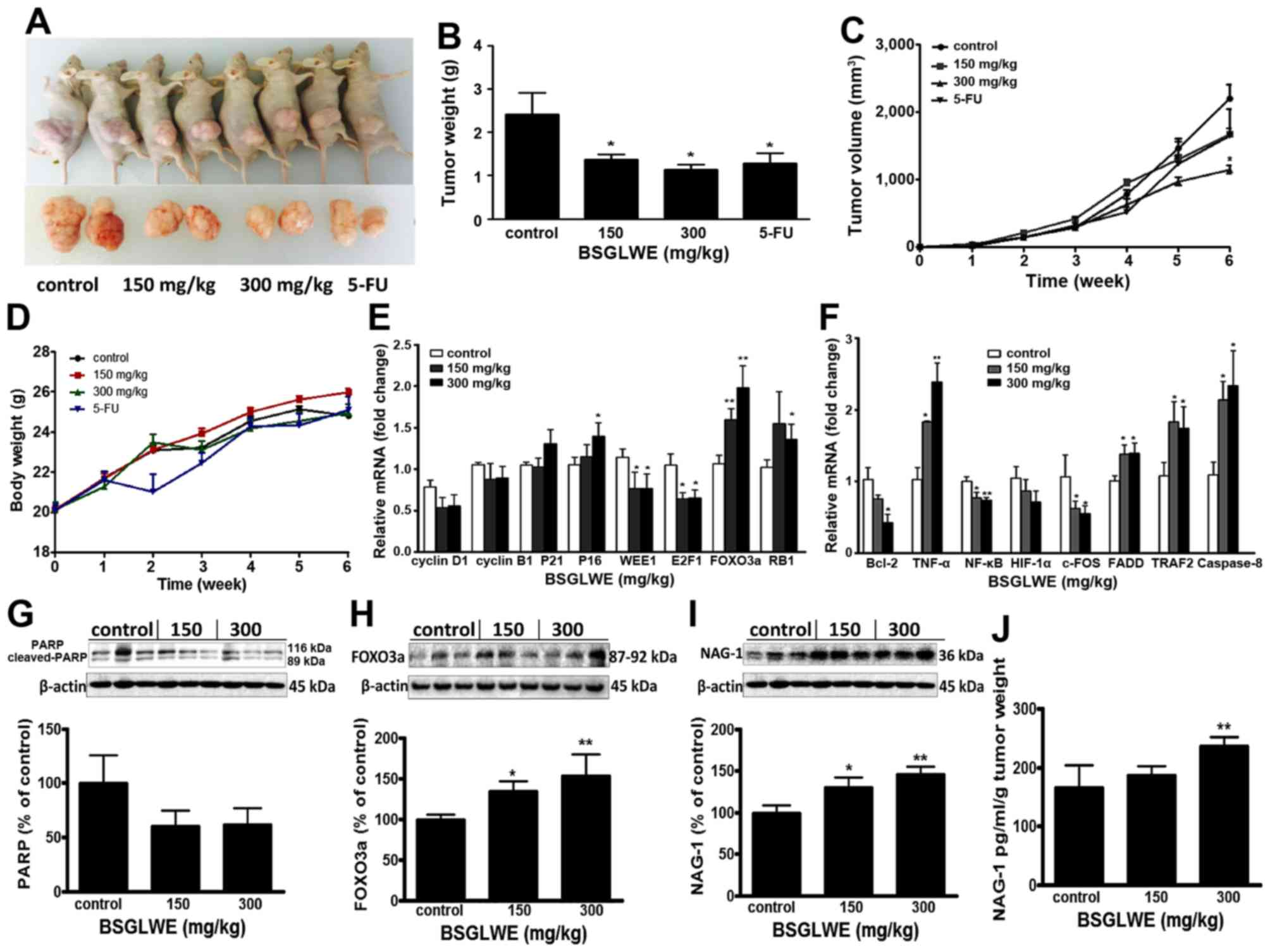 Anticarcinogenic Effects Of Water Extract Of Sporoderm Broken Spores Of Ganoderma Lucidum On Colorectal Cancer In Vitro And In Vivo