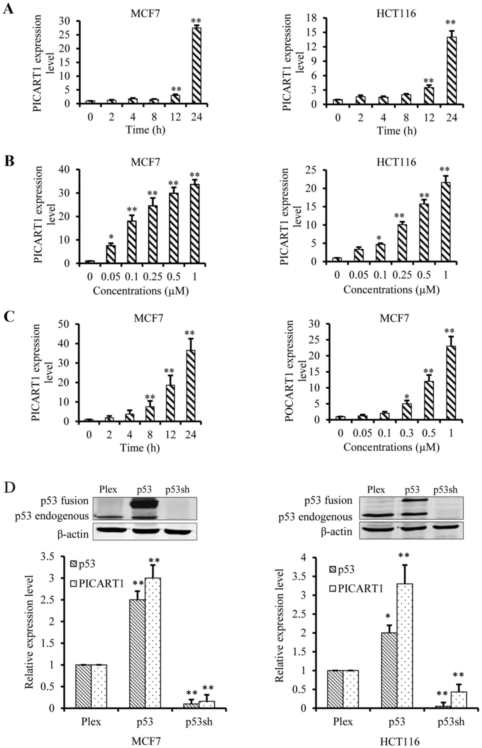 P53 Inducible Long Non Coding Rna Picart1 Mediates Cancer Cell H 261 Block Diagram Mcf7 And Hct116 Cells Were Treated With Rita At Indicated Concentrations For 24 C Time Dose Dependent Induction By Doxorubicin