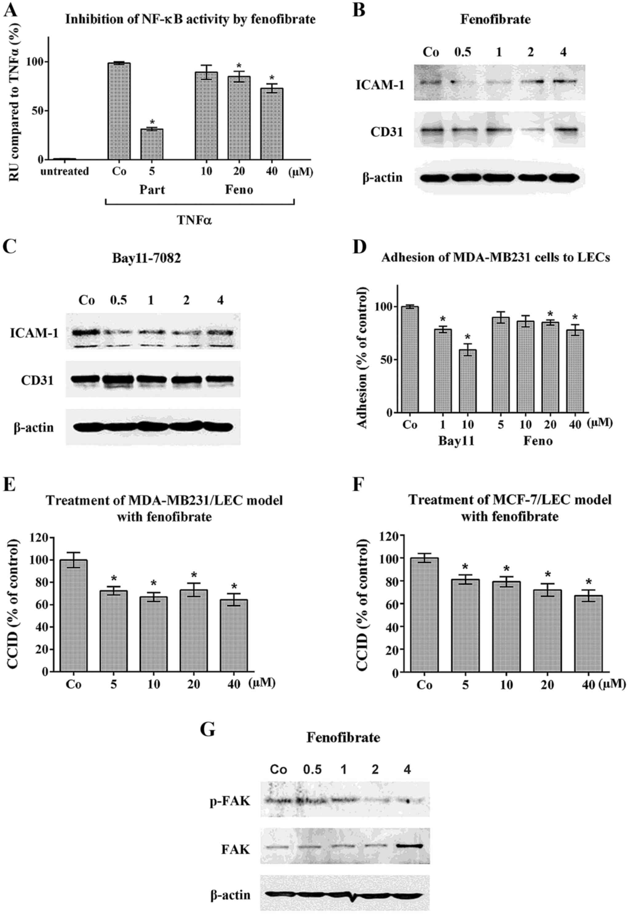 Fenofibrate inhibits tumour intravasation by several independent