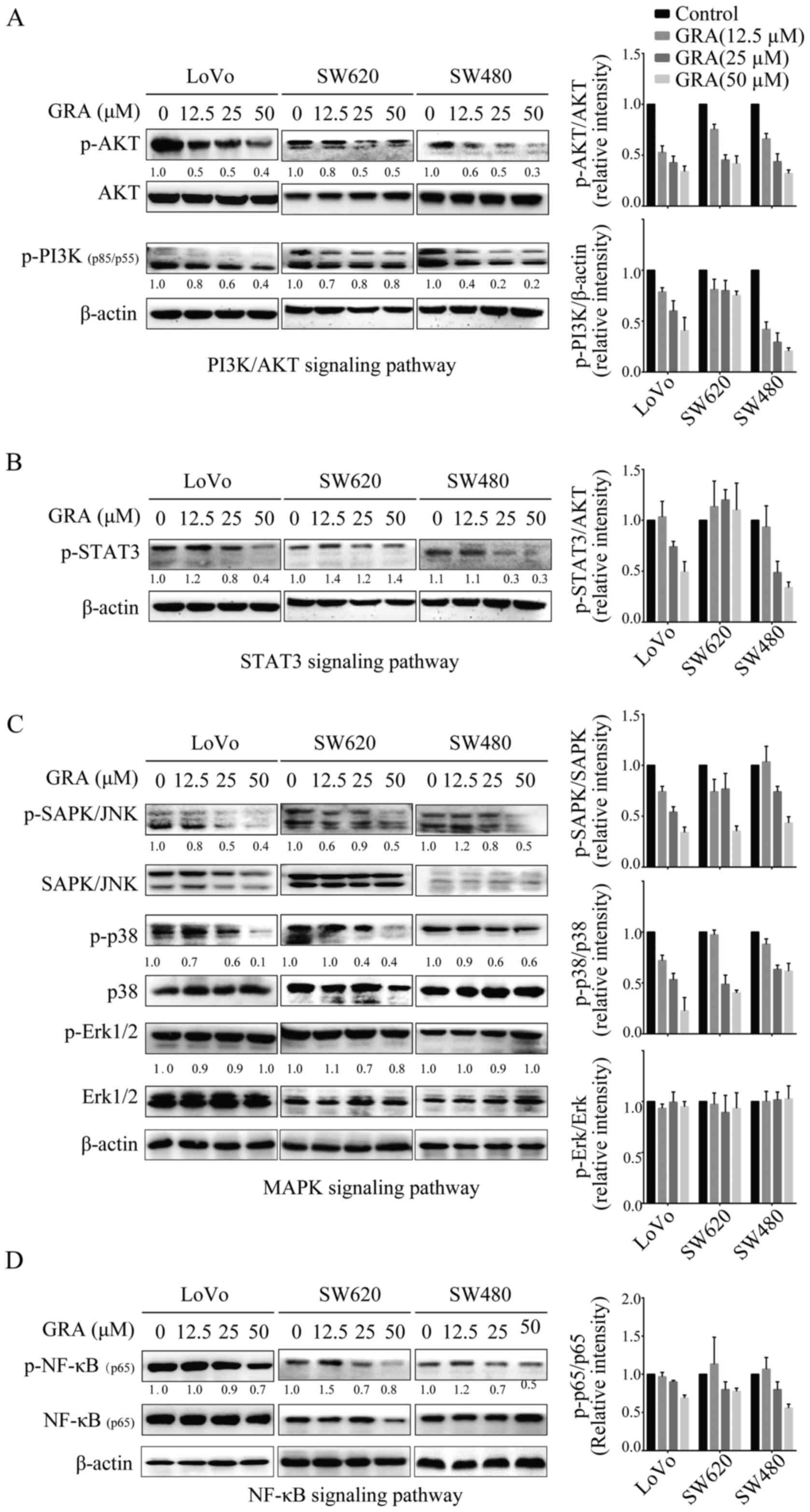 18 β-glycyrrhetinic acid exhibits potent antitumor effects