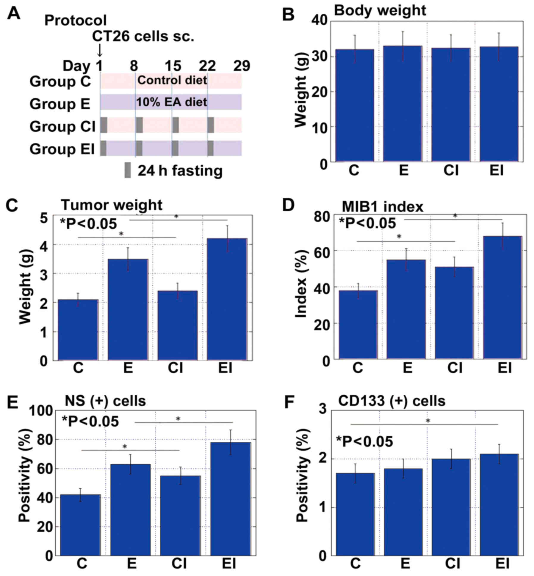 Intermittent calorie restriction enhances epithelial