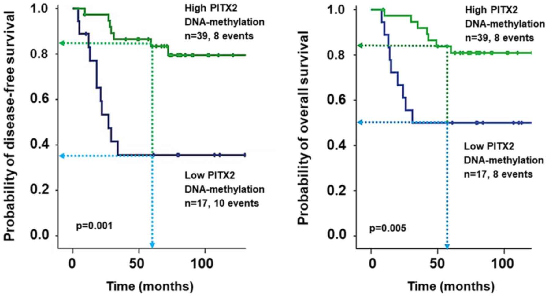 PITX2 DNA-methylation predicts response to anthracycline-based