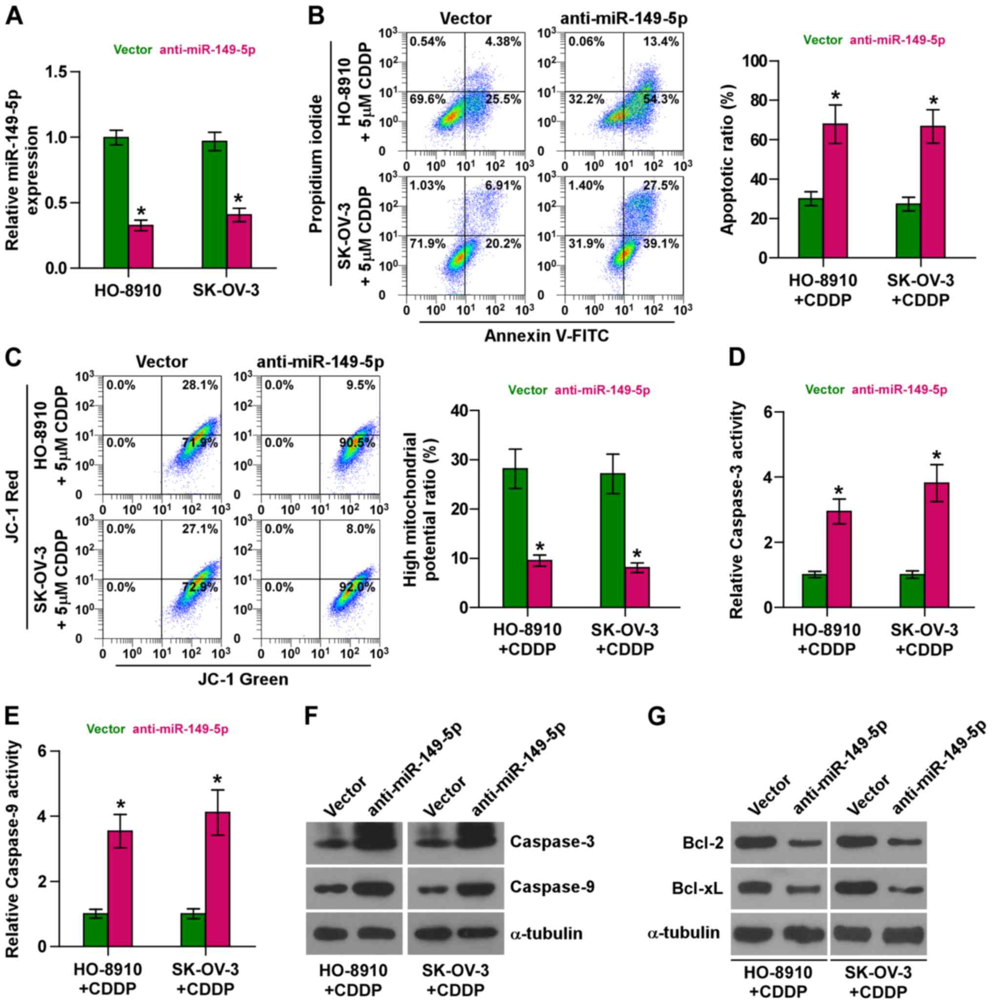 Mir 149 5p Promotes Chemotherapeutic Resistance In Ovarian Cancer Via The Inactivation Of The Hippo Signaling Pathway