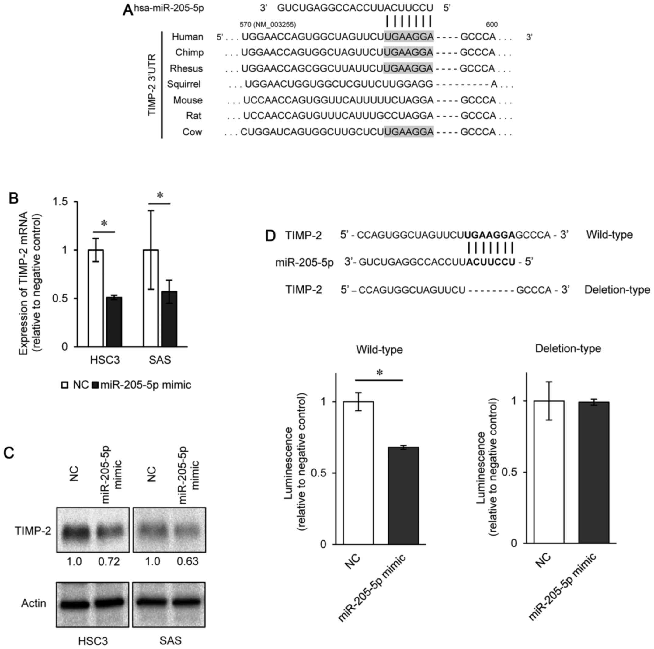 Microrna 205 5p Suppresses The Invasiveness Of Oral Squamous Cell Vada Fuse Box Figure 4 Timp 2 Is A Direct Target Mir Schematic Showing Conservation Putative Site In 3 Utr