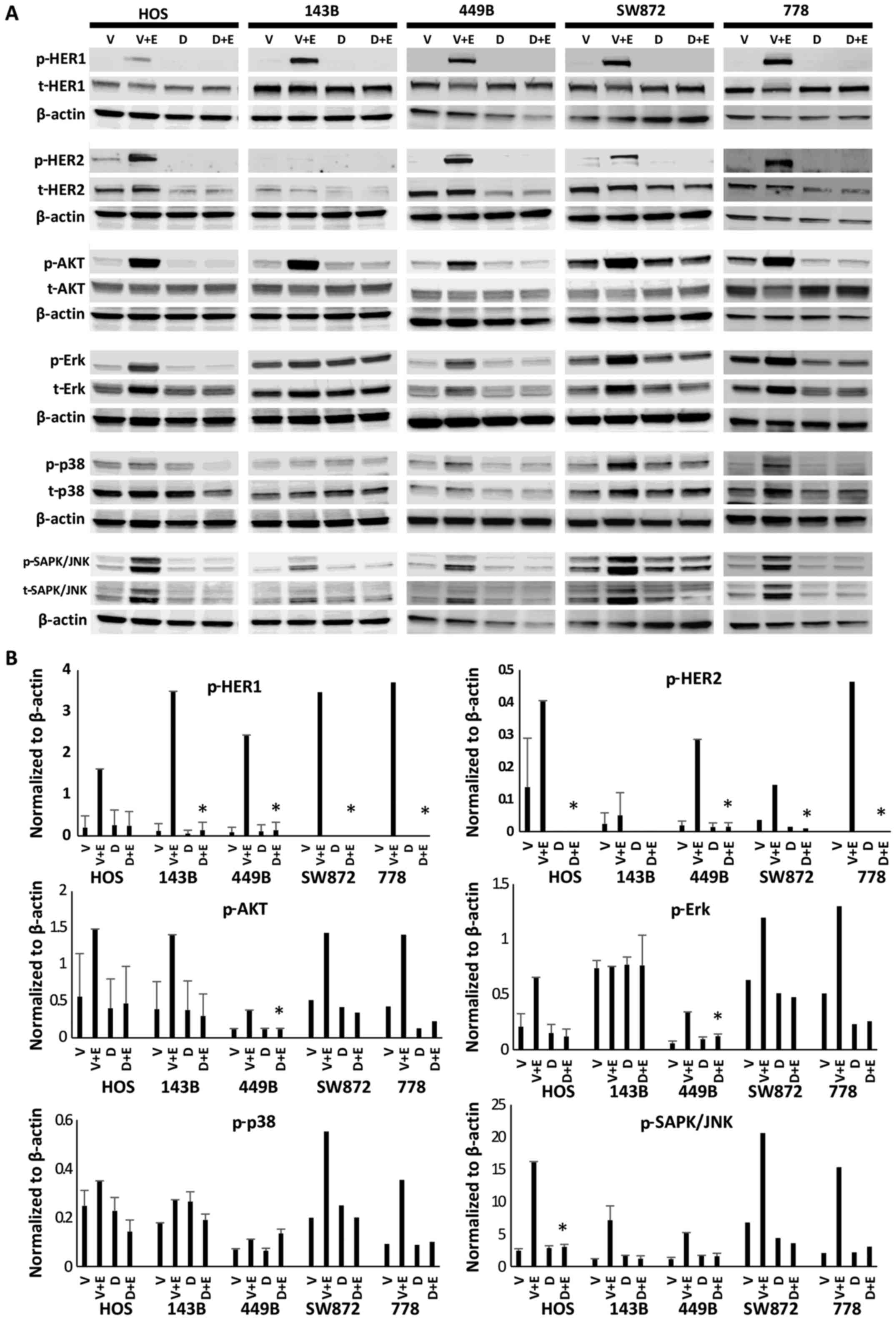 Antitumour effects and mechanisms of action of the panHER inhibitor