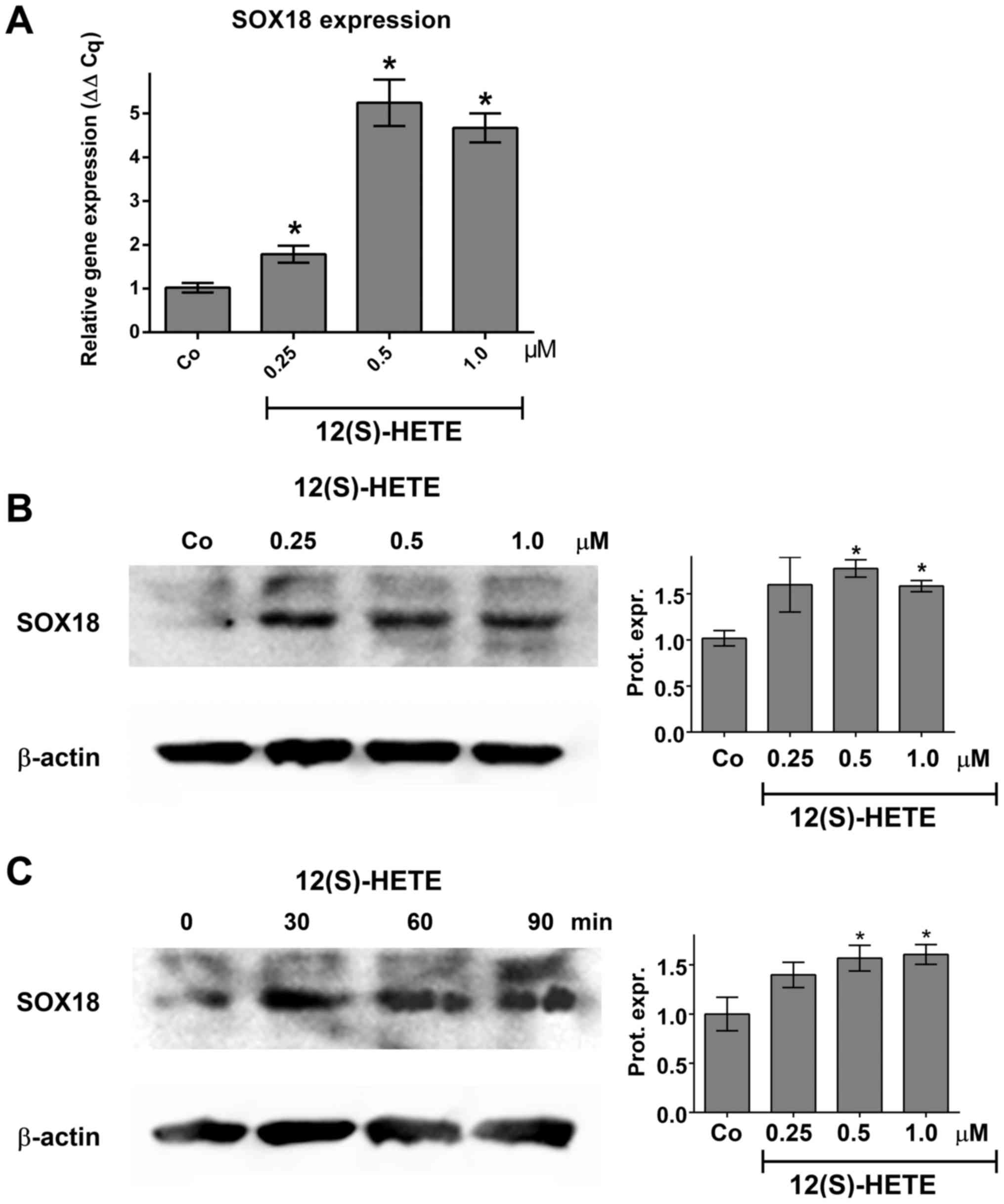12(S)-HETE induces lymph endothelial cell retraction in