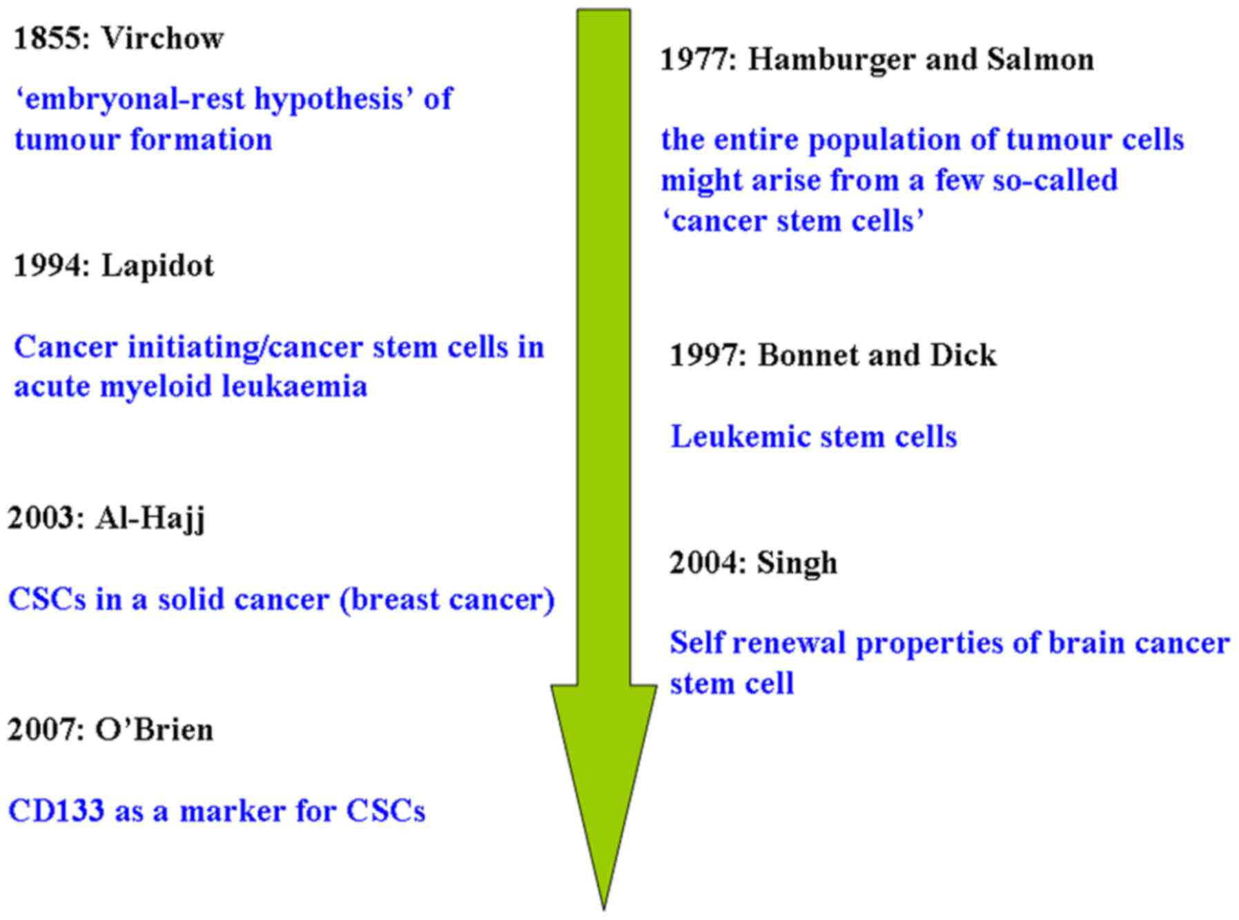 Cancer stem cells and hypoxia-inducible factors (Review)