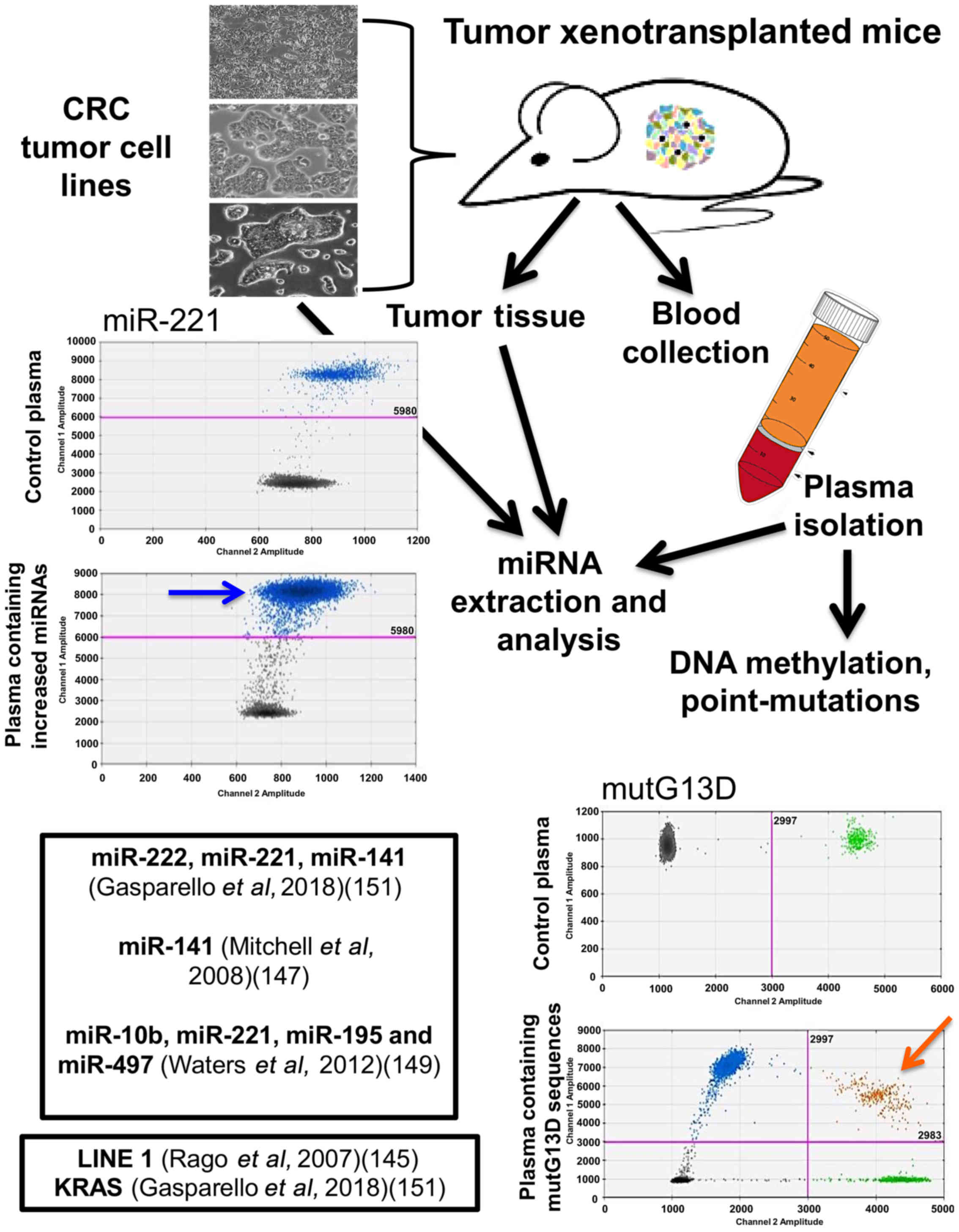 Figure 2. Study workflow on an in vivo model system to validate liquid  biopsy protocols. Three human colorectal cancer cell lines can be selected  as proxies ...