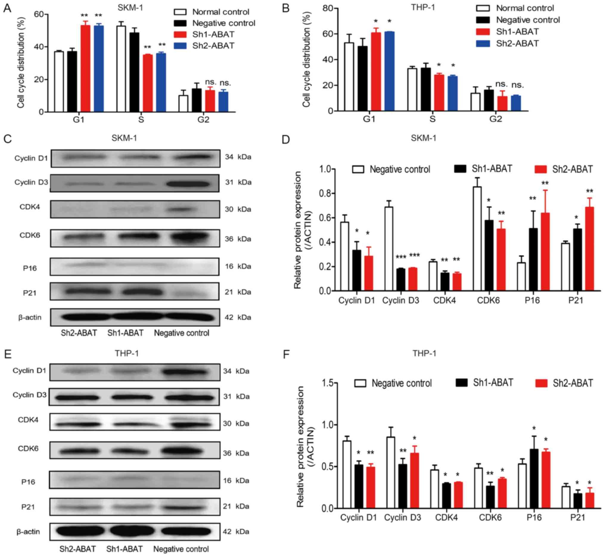 High methylation of the 4-aminobutyrate aminotransferase