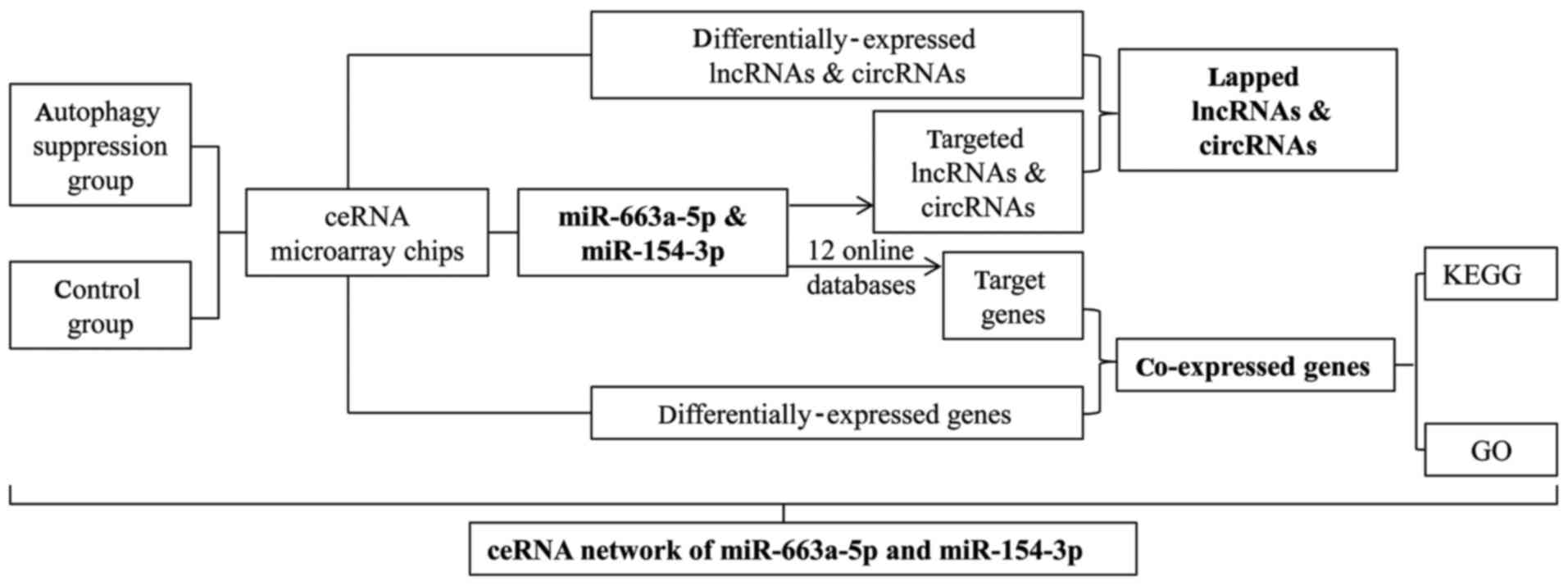 Potential ceRNA networks involved in autophagy suppression of ... 28389e49ab