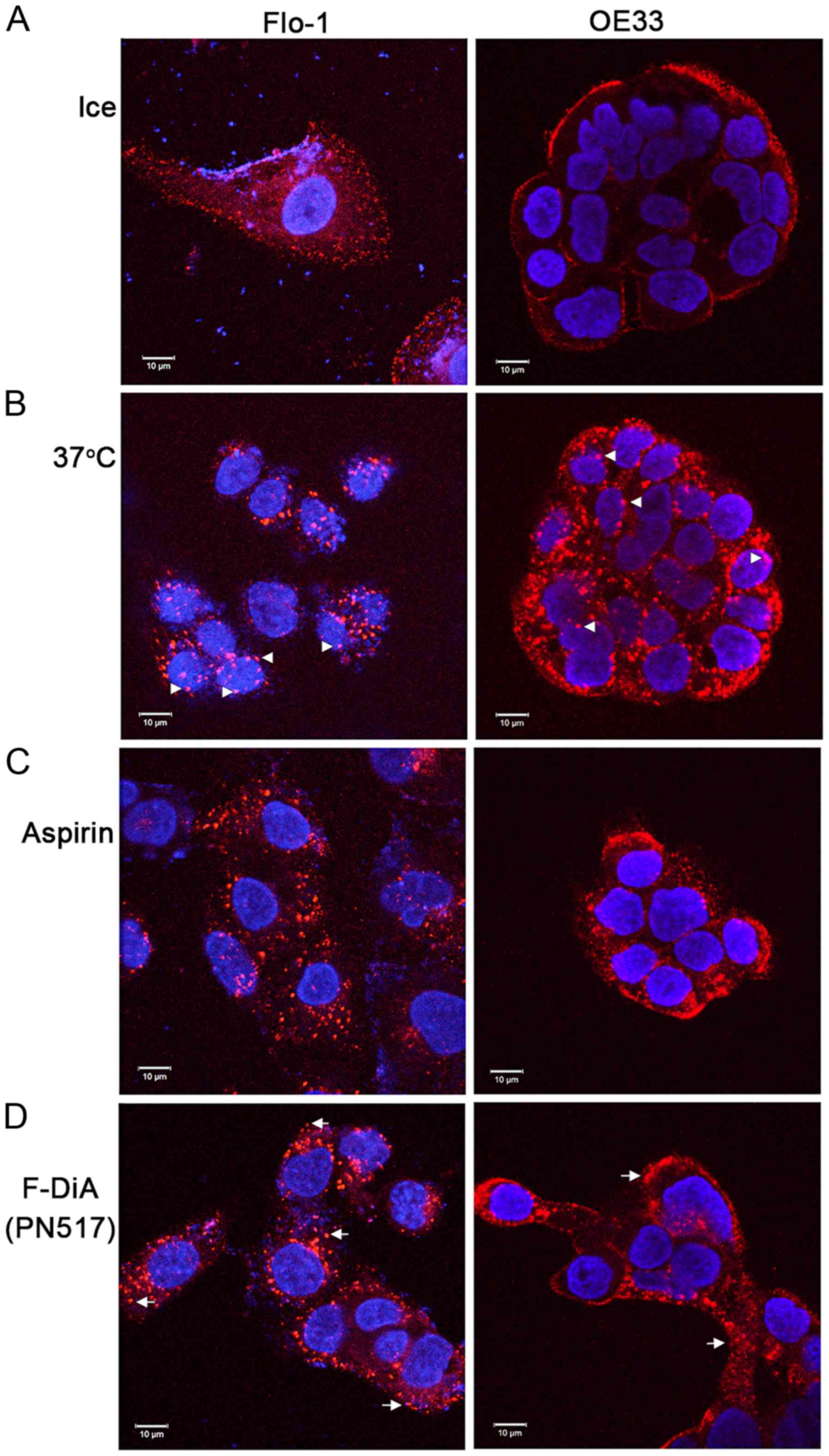 A novel mechanism for the anticancer activity of aspirin and salicylates