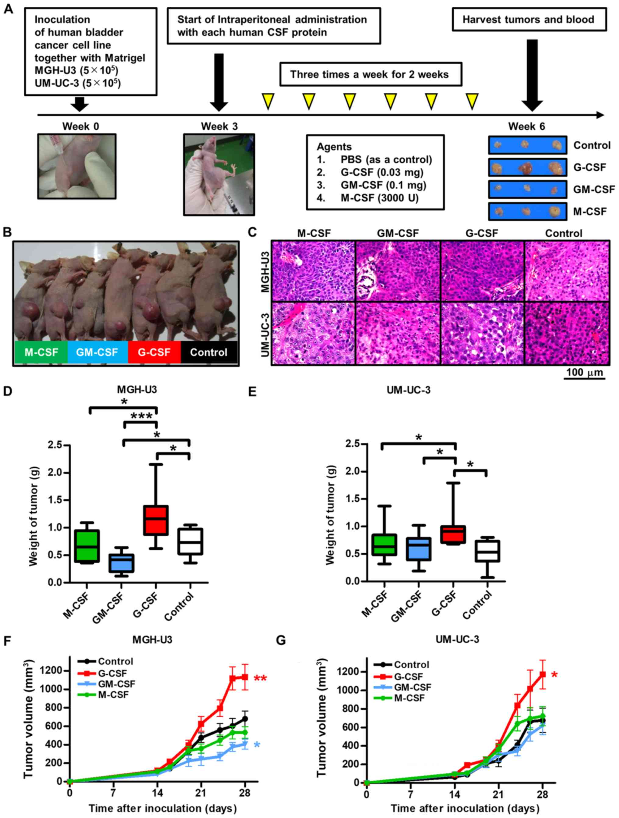 Evaluation of pro‑ and anti‑tumor effects induced by three