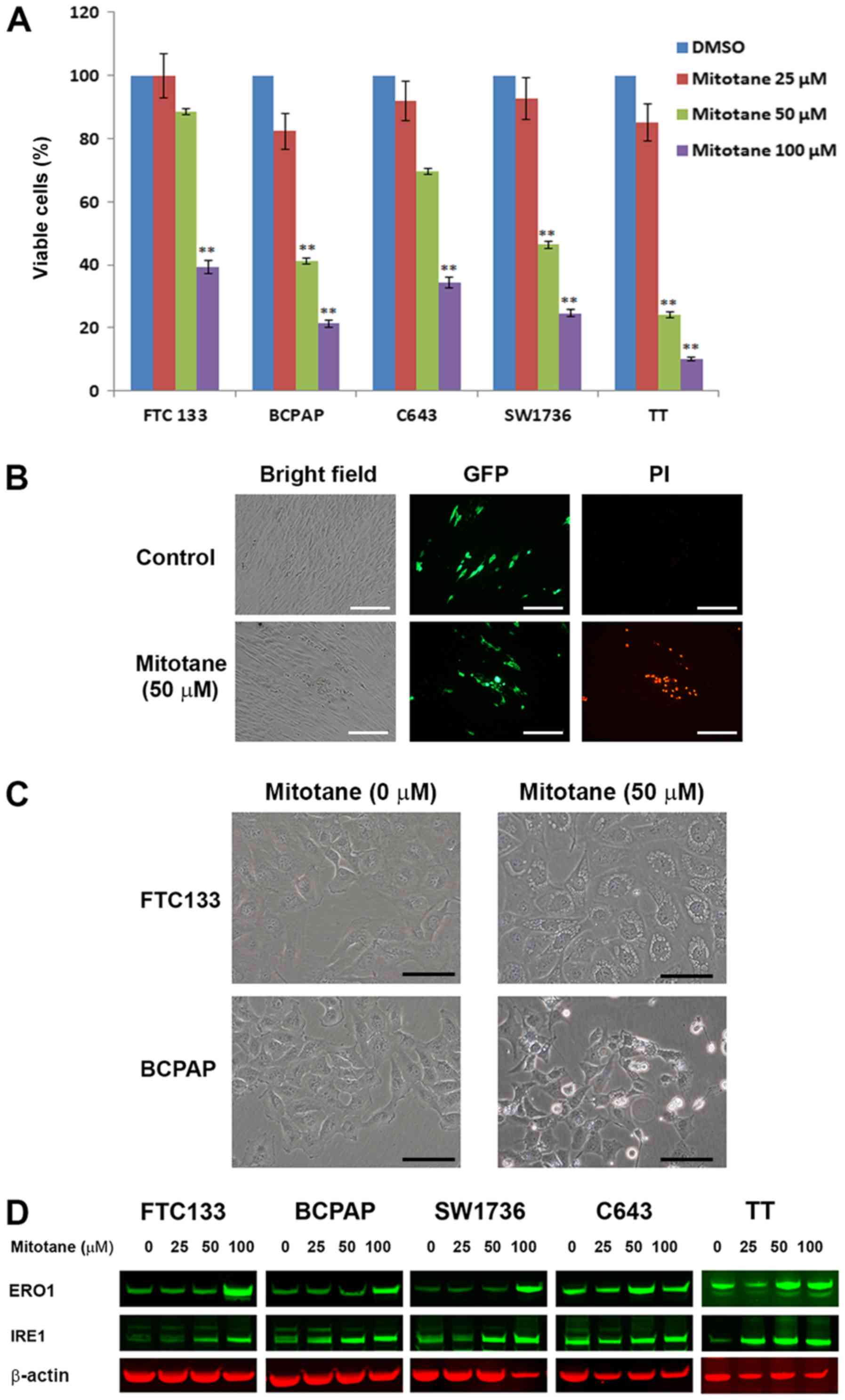 Mitotane induces mitochondrial membrane depolarization and