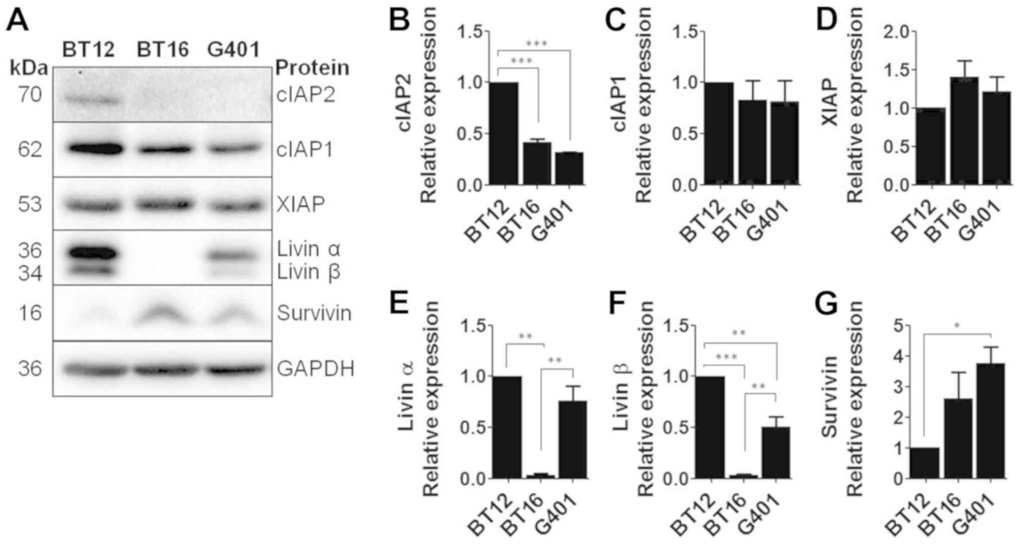The XIAP inhibitor embelin sensitises malignant rhabdoid