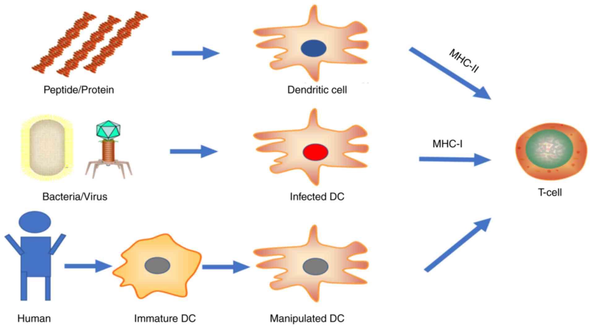 human papilloma virus antiviral)