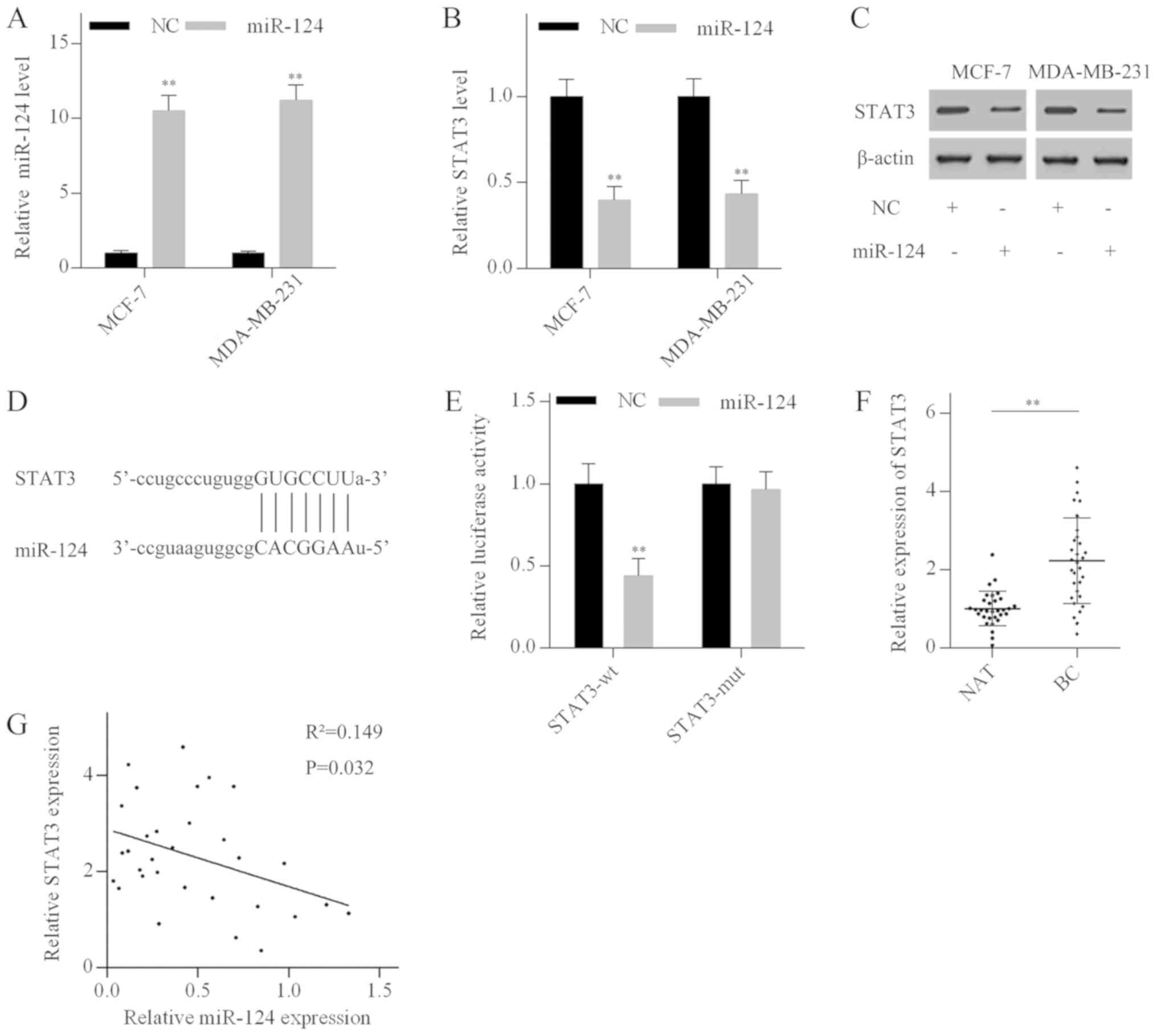NEAT1/miR‑124/STAT3 feedback loop promotes breast cancer