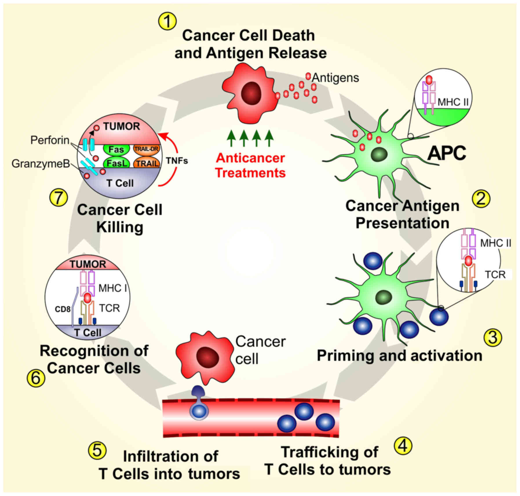 Cutaneous Melanoma And The Immunotherapy Revolution Review