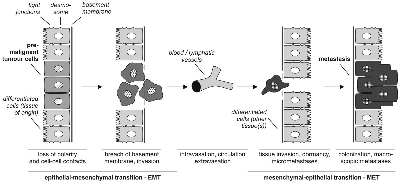 epigenetic control of epithelial
