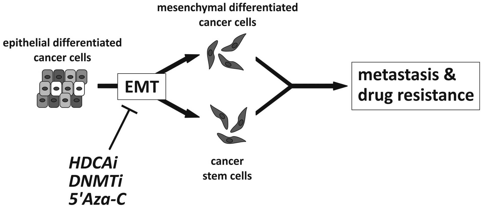 Epigenetic Control Of Epithelial Mesenchymal Transition In