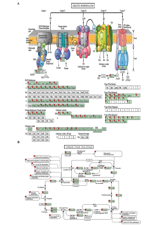 Mass spectrometry-based, label-free quantitative proteomics of round