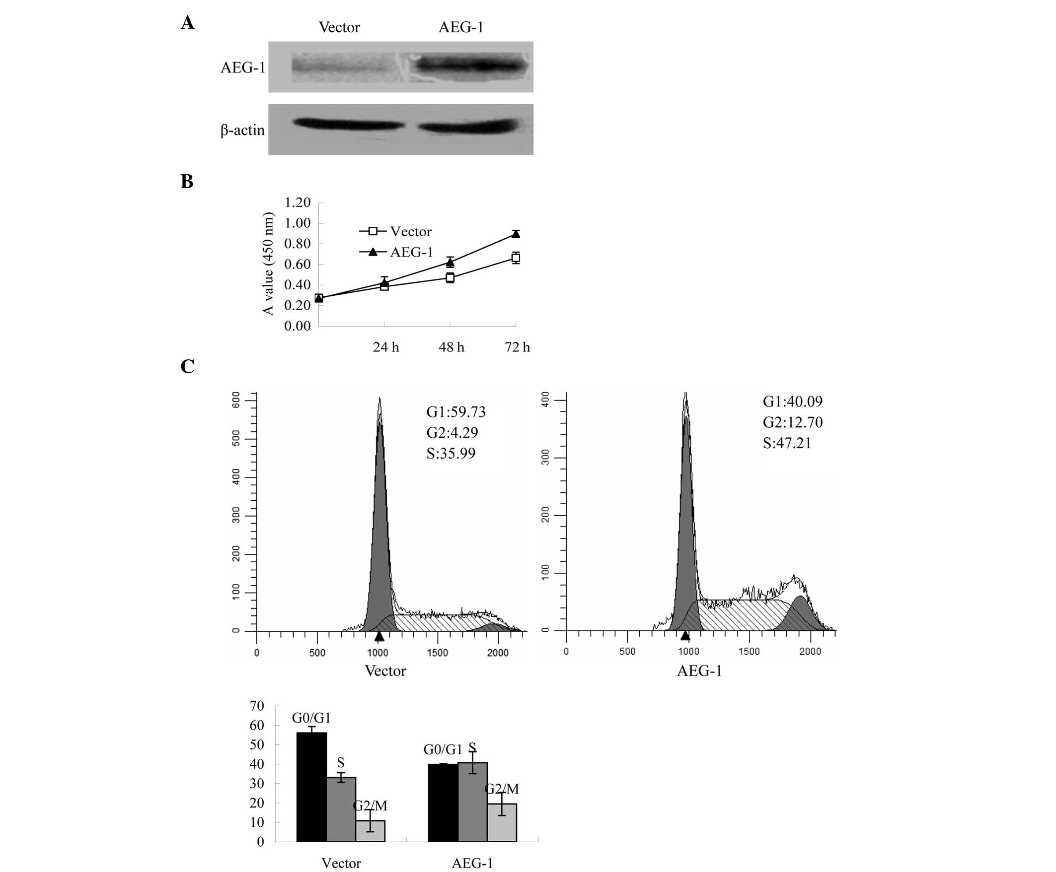 (PDF) Expression of astrocyte elevated gene-1 closely