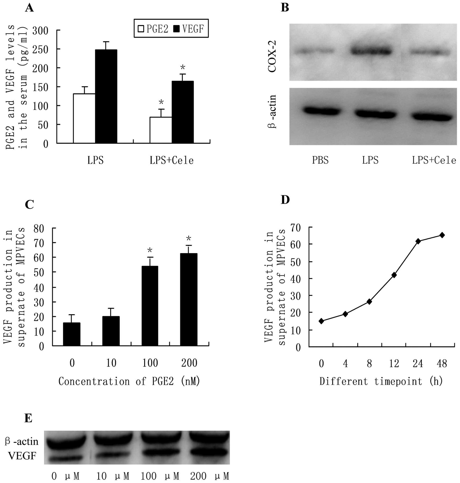 Pathways of Prostaglandin-Mediated Recovery of Ischemia-Injured Intestine.