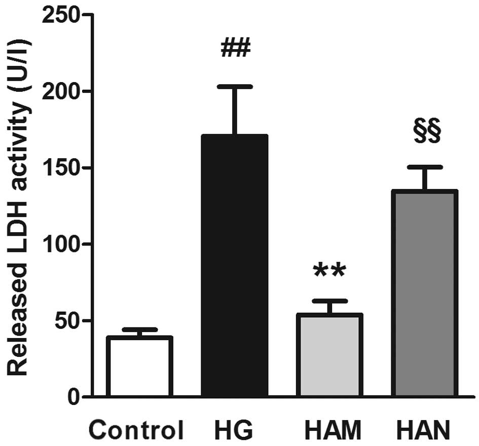 Agmatine protects Müller cells from high‑concentration glucose