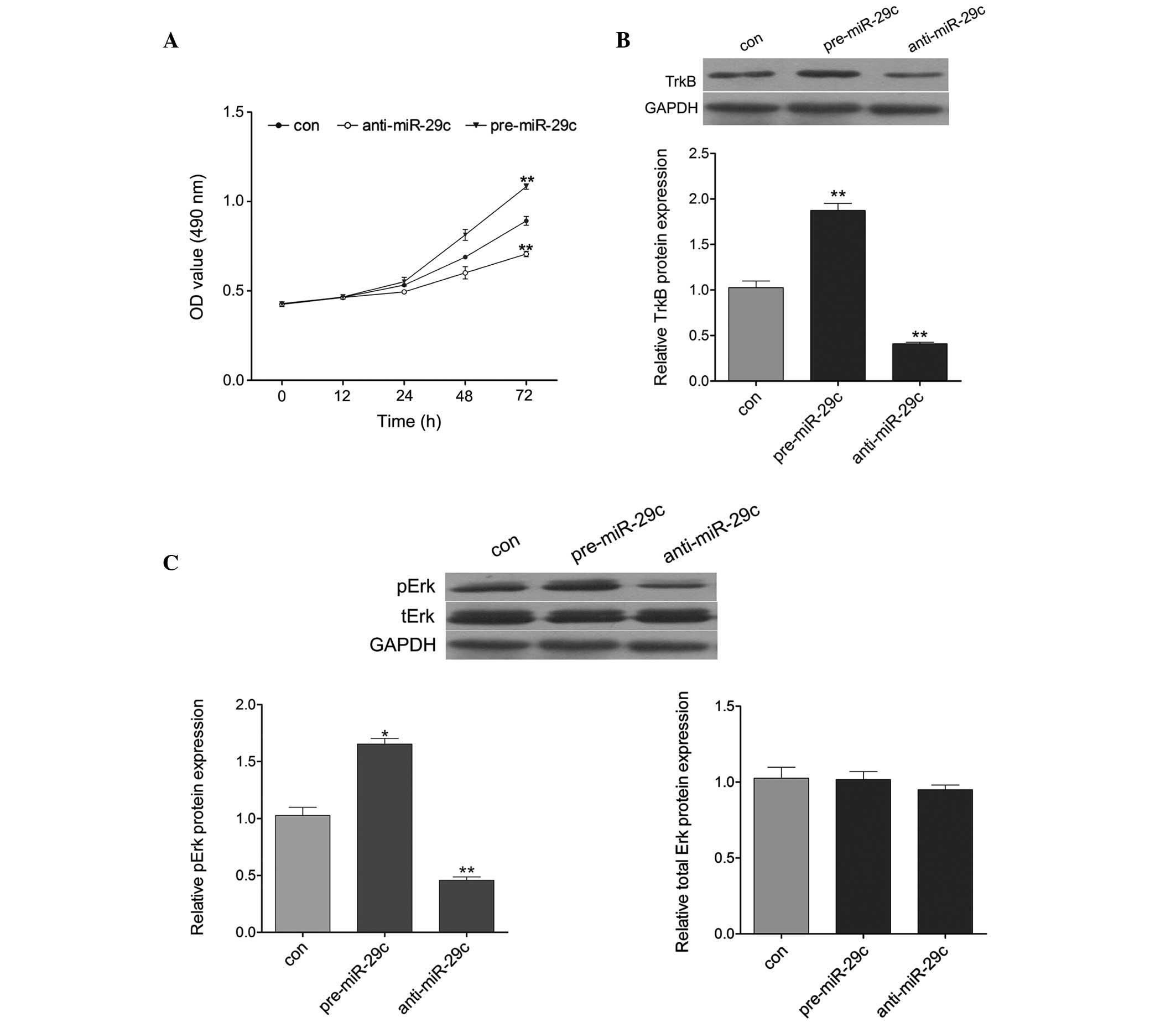 Dysregulated DNA Methyltransferase 3A Upregulates IGFBP5