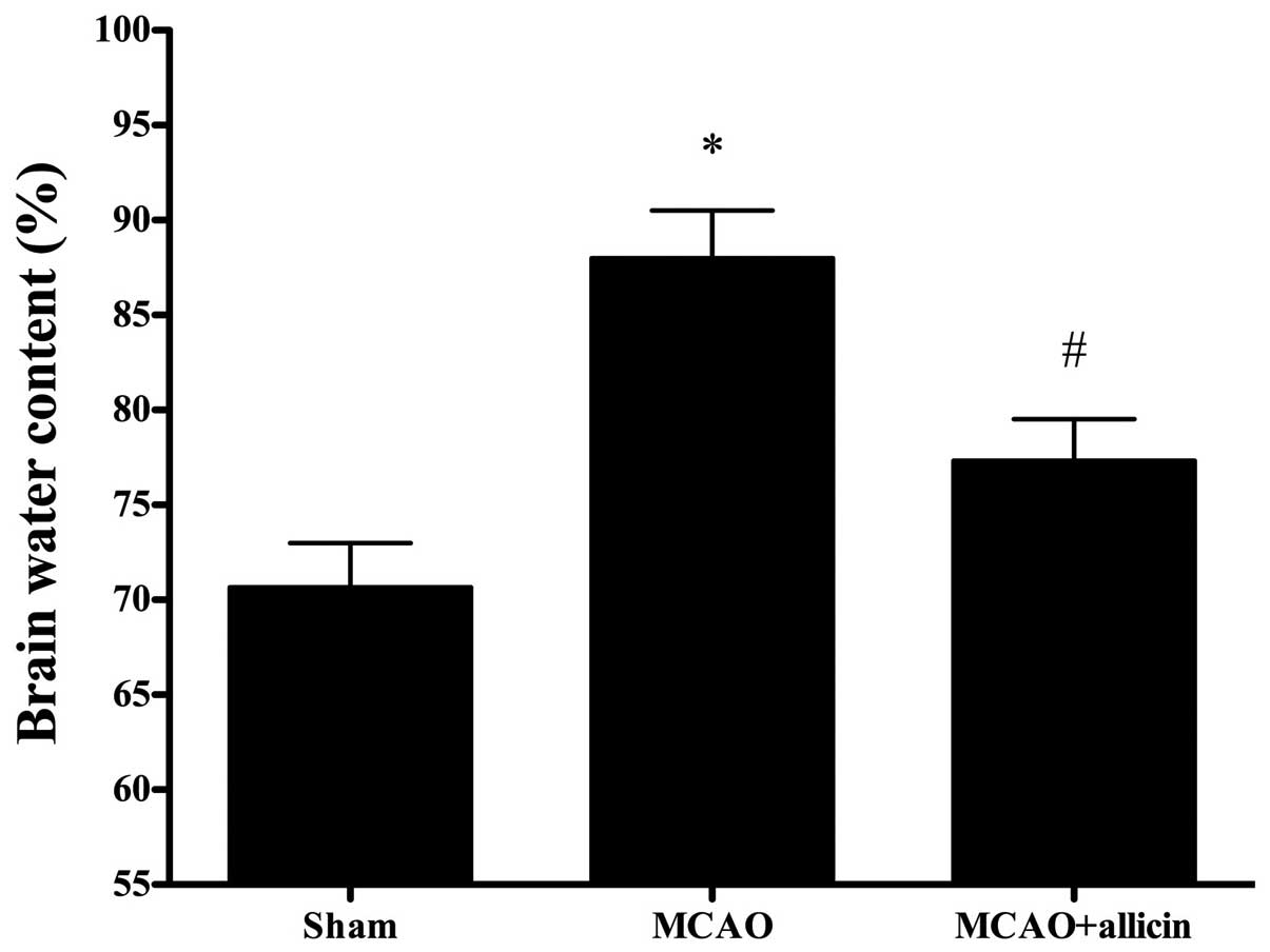 Protective effects of allicin against ischemic stroke in a rat model