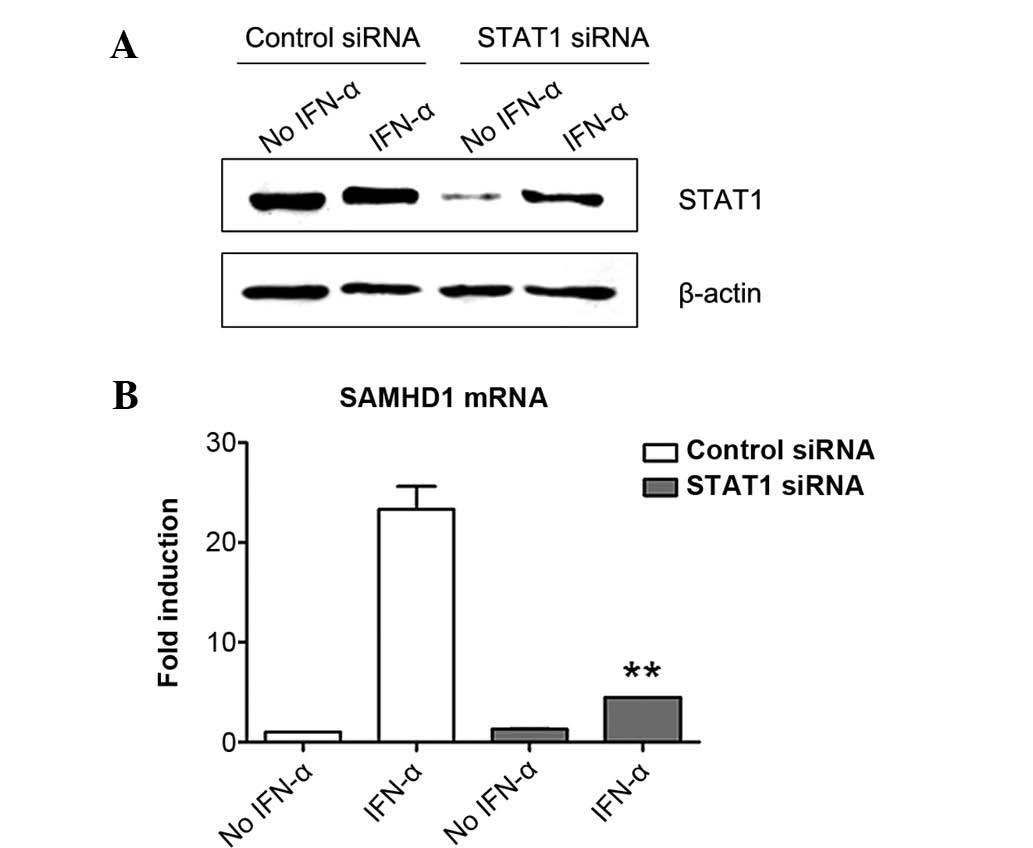 a lab experiment of the induction of protein expression in a prokaryote Under laboratory conditions recombinant protein expression in escherichia coli protein that allow thermal induction of recombinant pro.