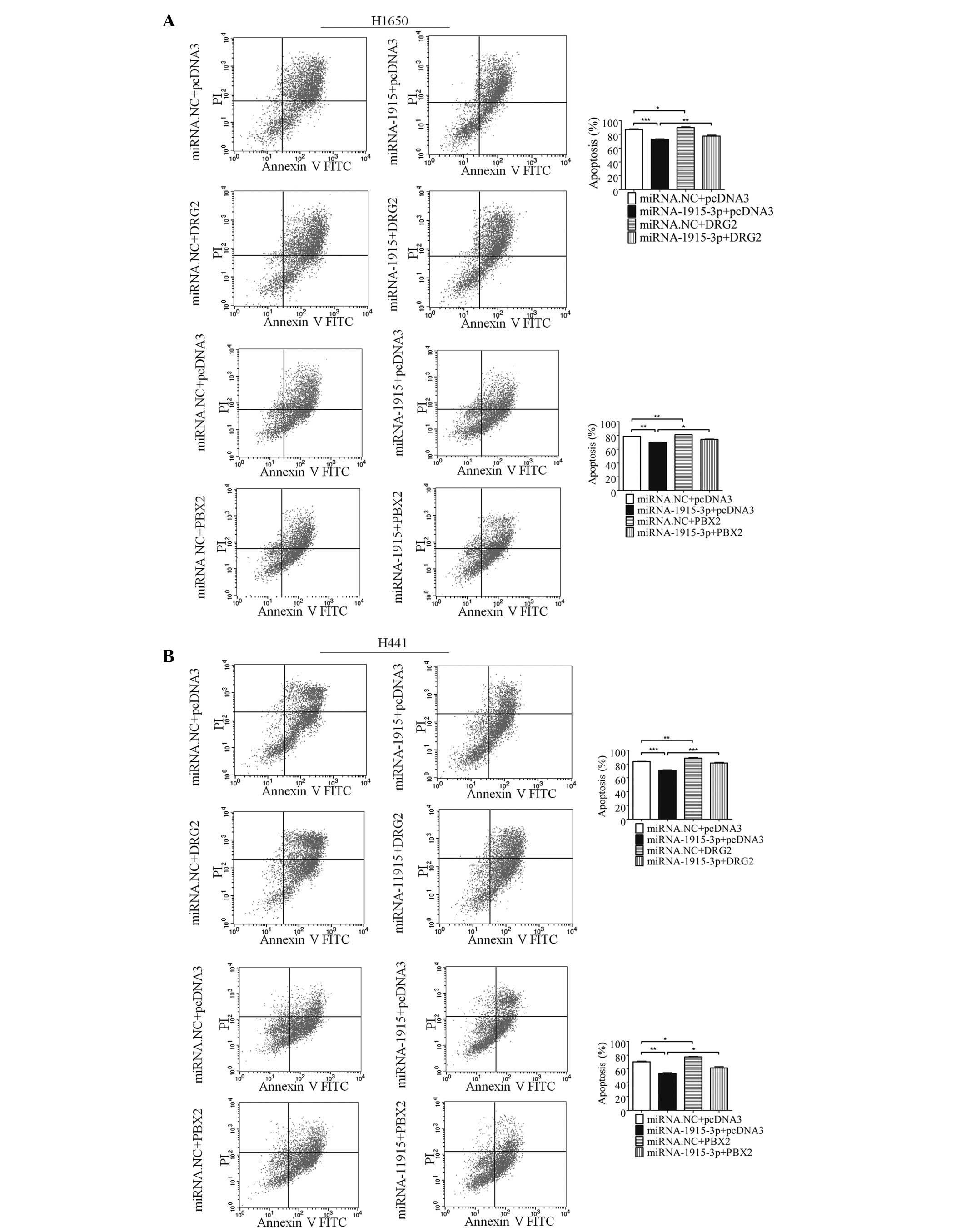 h 050505 auto electrical wiring diagrammicrorna u20111915 u20113p prevents the apoptosis of lung cancer