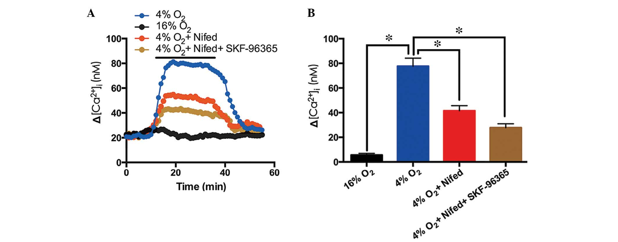 Trpc6 is required for hypoxiainduced basal intracellular calcium time course of ca2i prior to and following hypoxia 4 o2 blue n6 experiments in 108 cells in pvsmcs effect of 5 m nifedipine on the response of pooptronica Gallery