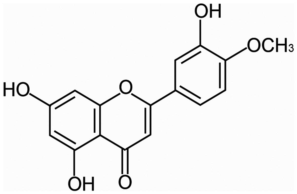 diosmetin inhibits the metastasis of hepatocellular