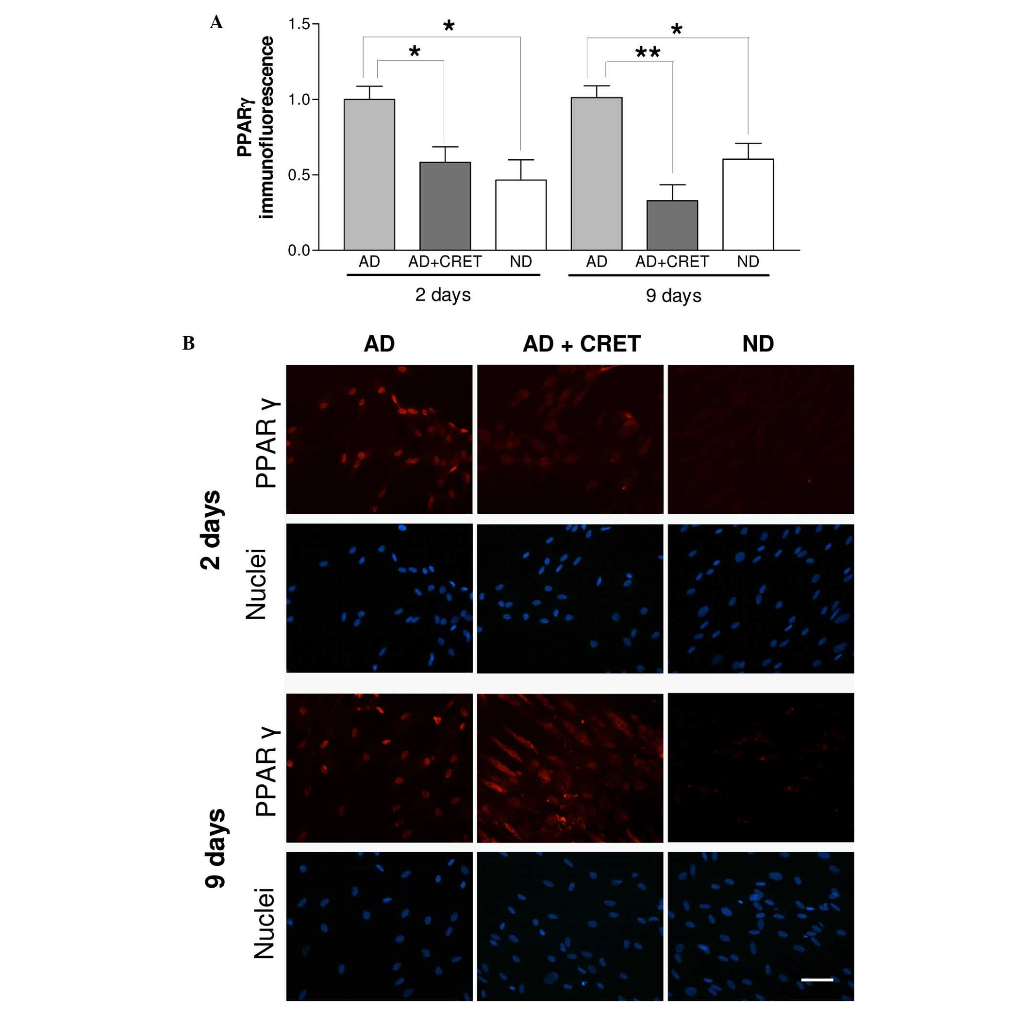 Antiadipogenic effects of subthermal electric stimulation at