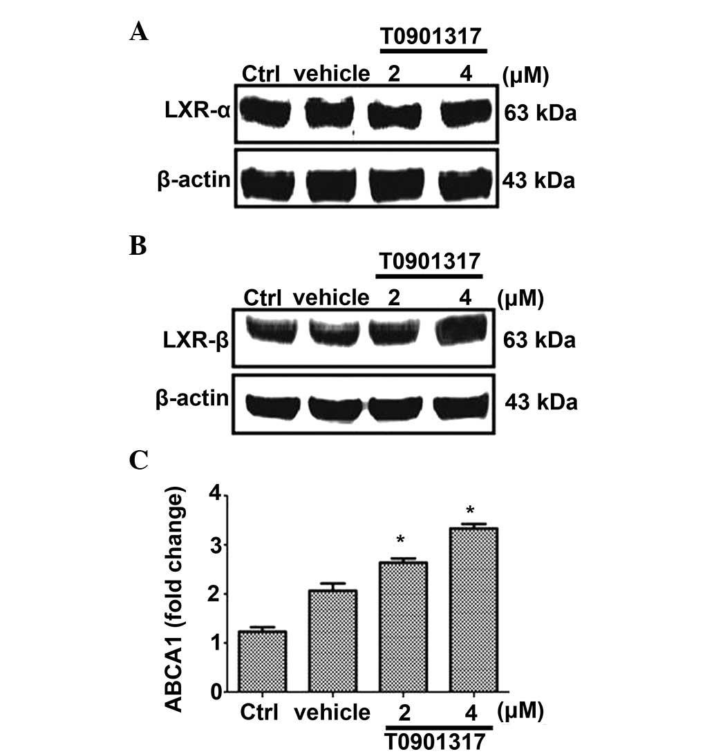 LXR agonist T0901317 upregulates thrombomodulin expression