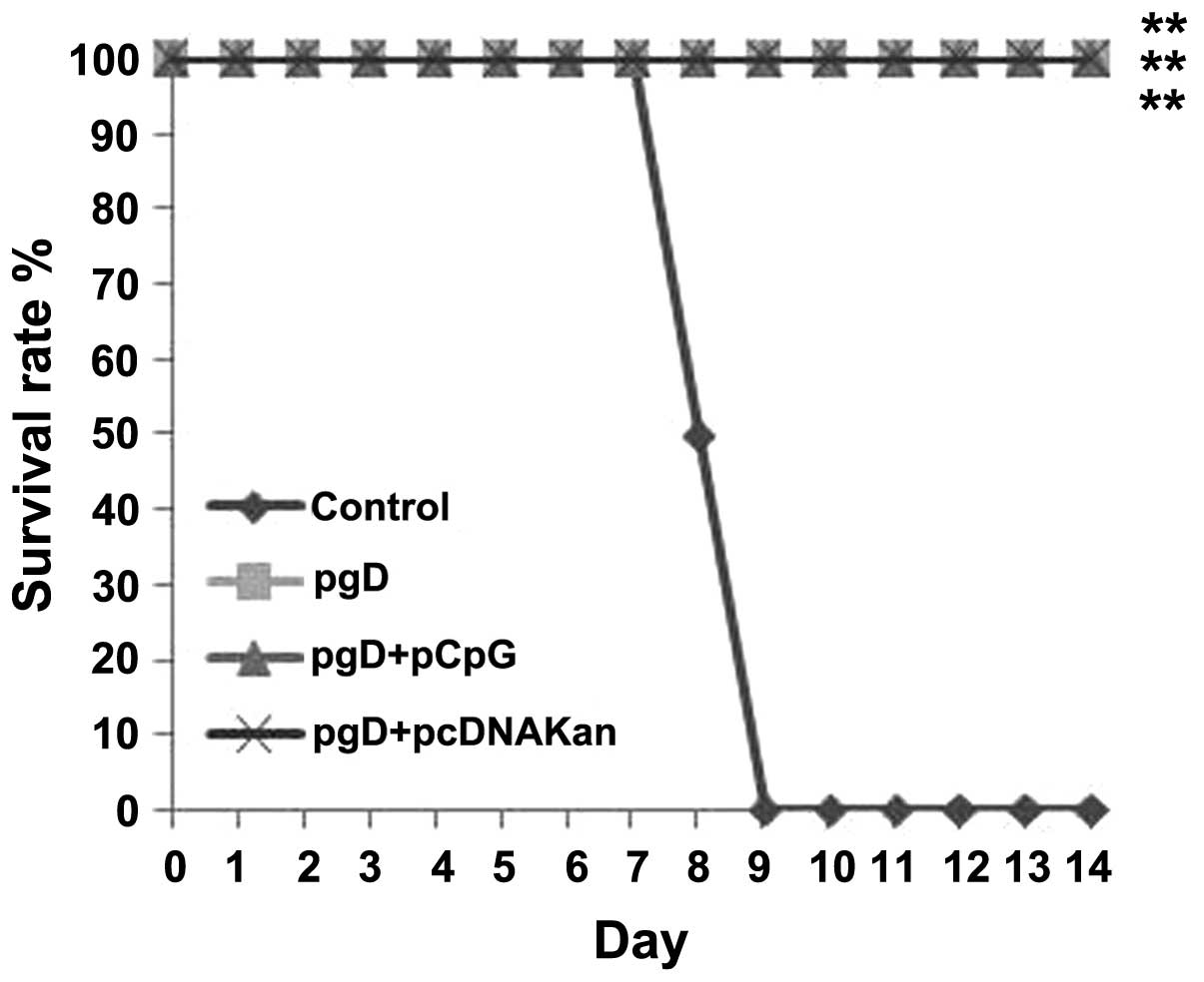A recombinant plasmid containing CpG motifs as a novel vaccine