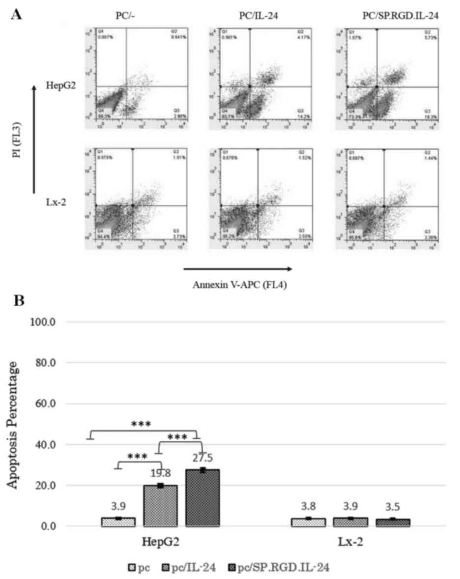 abcb95200758 Flow cytometry analysis of apoptosis induction by IL-24 and the modified  SP.RGD.IL-24. (A) Analysis of annexin V+ PI+ HepG2 and LX-2 cells following  ...