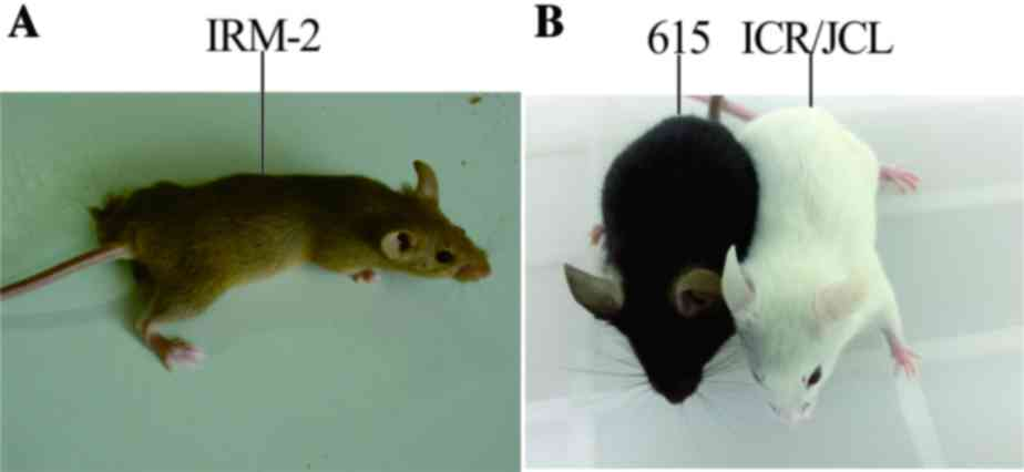 Mouse strain differences in SSRI sensitivity correlate with ...