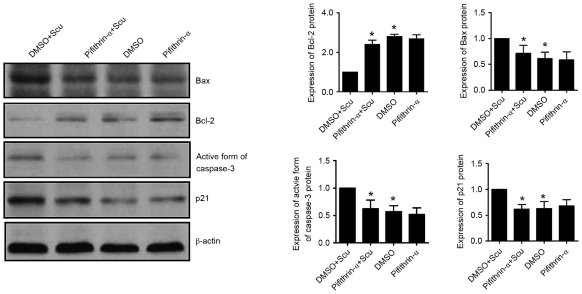 Scutellarin suppresses growth and causes apoptosis of human ...
