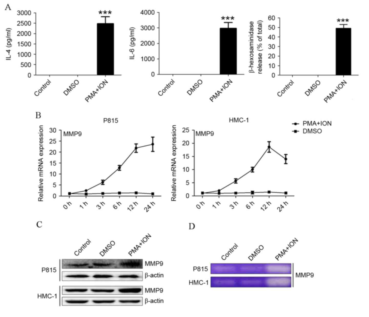 Activation‑induced upregulation of MMP9 in mast cells is a