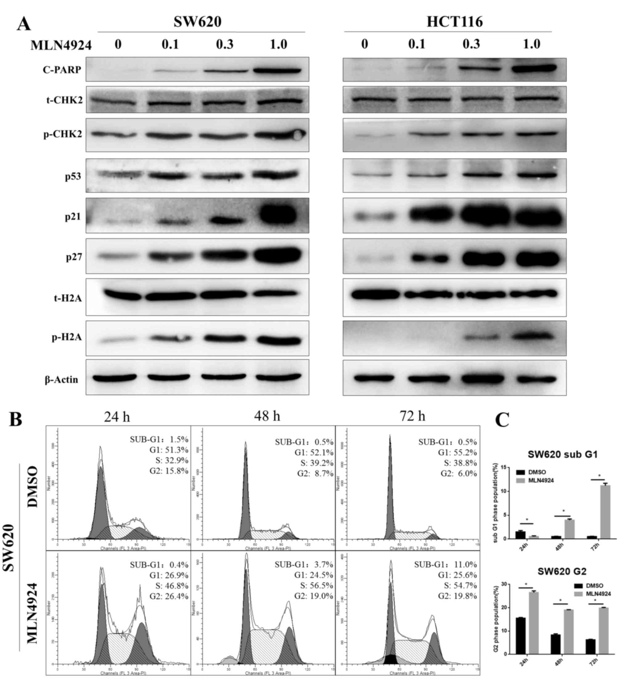 Neural precursor cell expressed, developmentally
