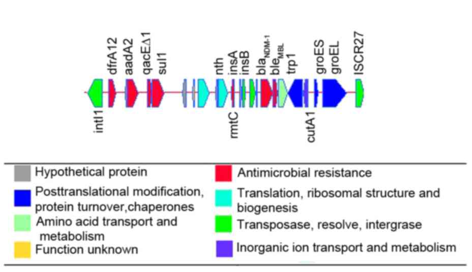 Characterization of a blaNDM‑1‑harboring plasmid from a