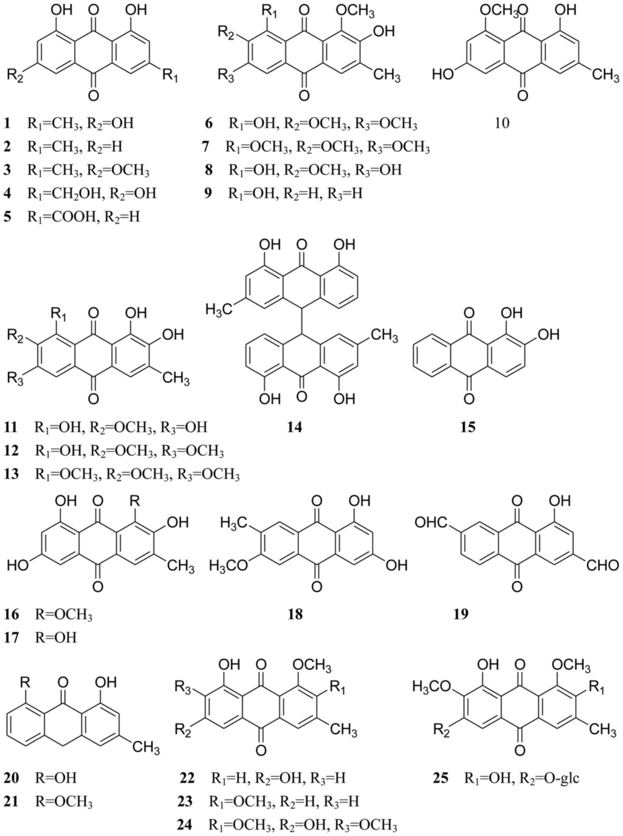 Phacelia (siderat): properties, photos, reviews. When to sow phacelia as siderat 43