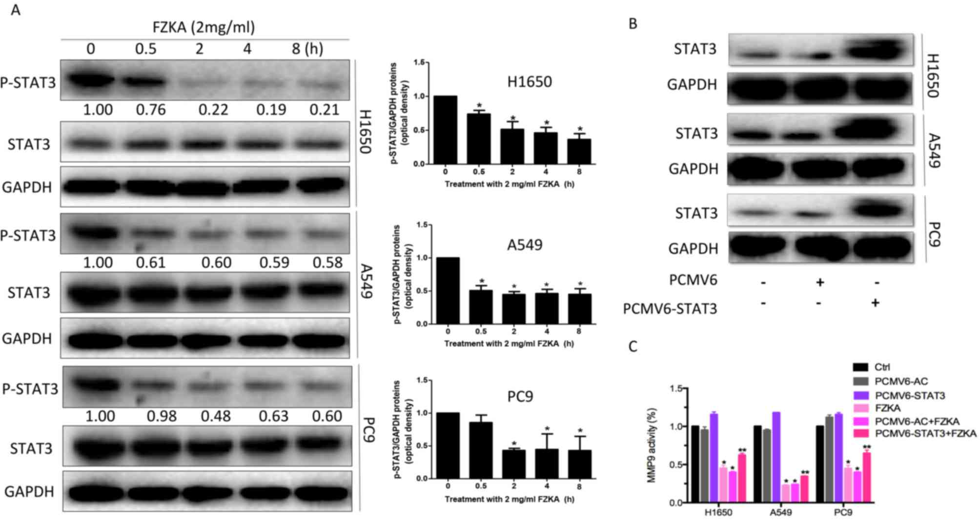 Chinese cancer cure herbs bibliography - Stat3 Regulates Mmp9 Activity In Lung Cancer Cells Treated With Fzka A Protein Expression Levels Of Stat3 Were Reduced Following Treatment With Fzka 2
