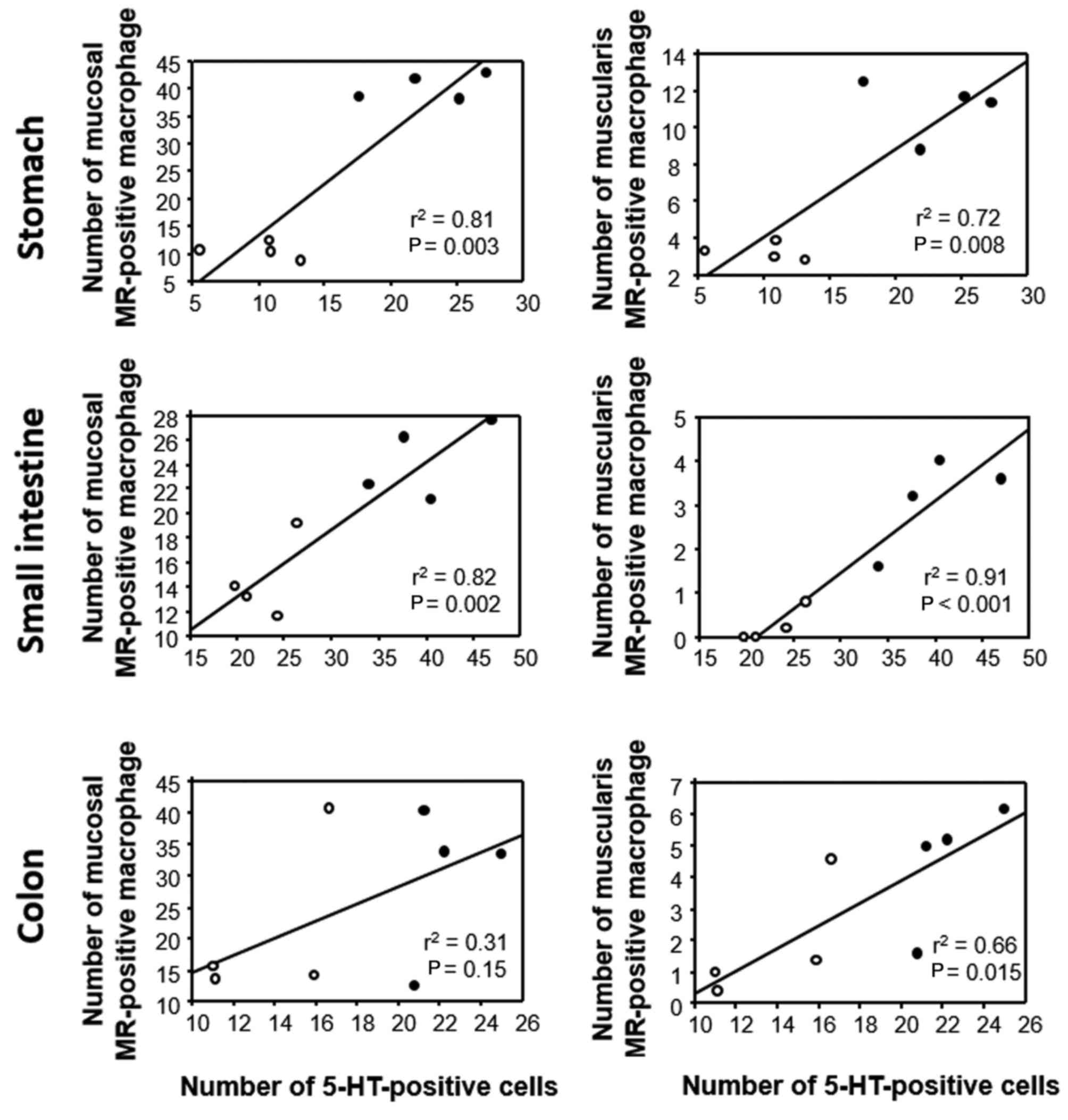 Gastrointestinal motility study colon