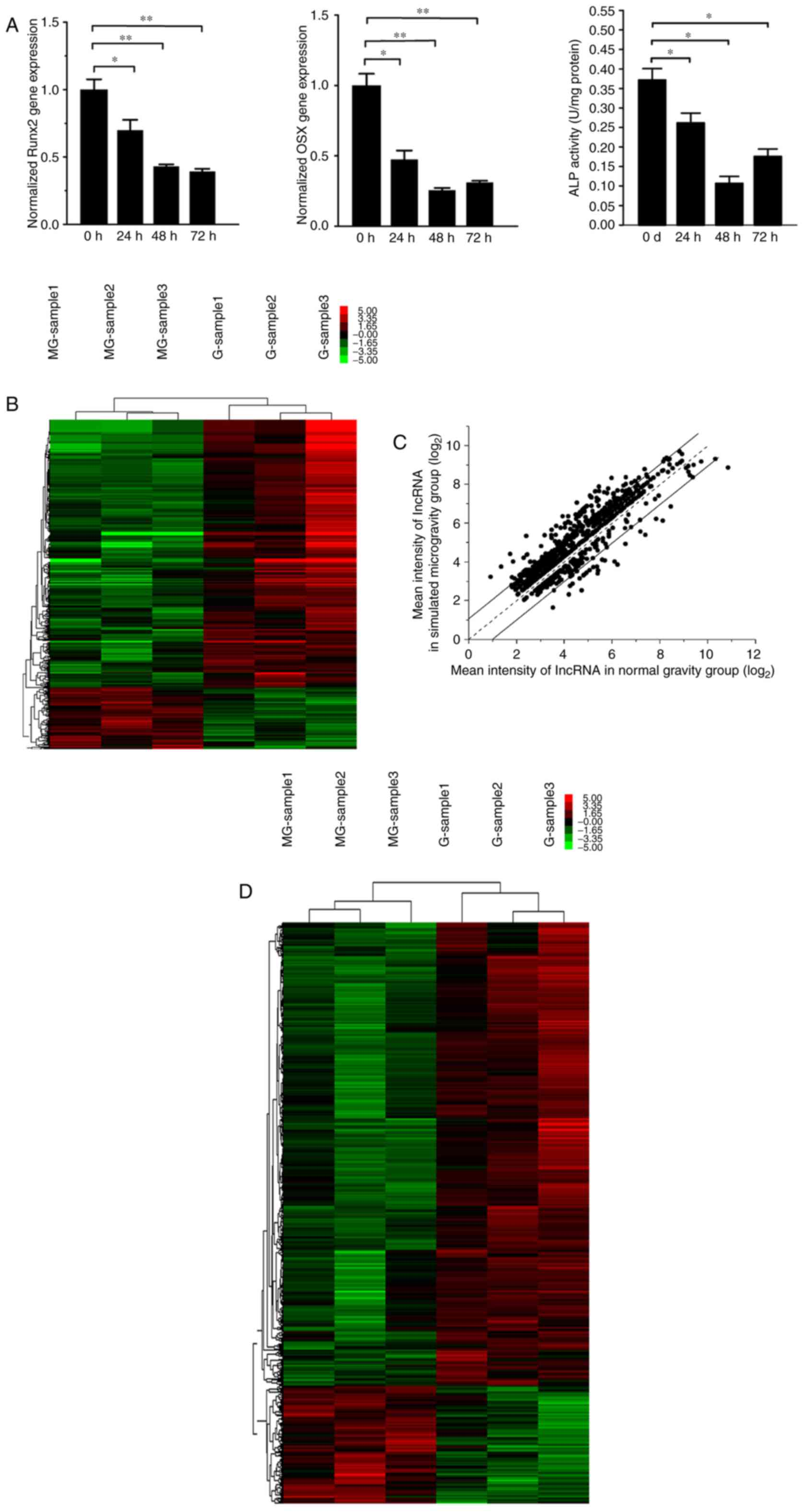 Genomewide Analysis And Prediction Of Functional Long Noncoding Transcribed Image Text 6 Use Nodal To Find The Short Circuit A Osteogenic Differentiation Was Assessed By Reverse Transcription Quantitative Polymerase Chain Reaction Osteoblast Marker Genes Activity