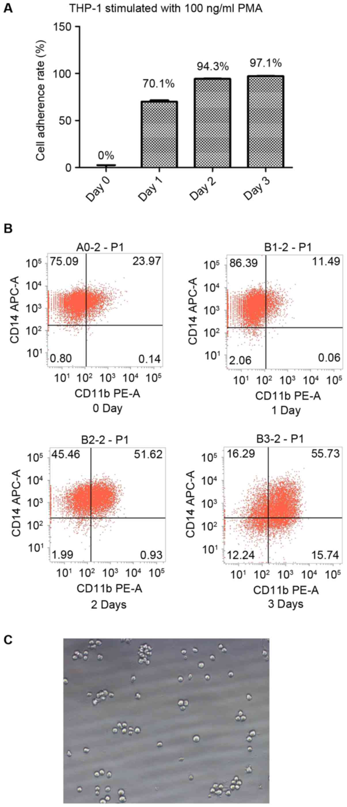 High-dose PMA with RANKL and MCSF induces THP‑1 cell
