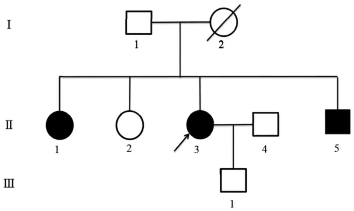 Analysis of men1 c482ga py161asp mutation in a pedigree pedigree diagram of the probands family family members are indicated by generations roman numbers and individuals arabic numbers pooptronica Gallery