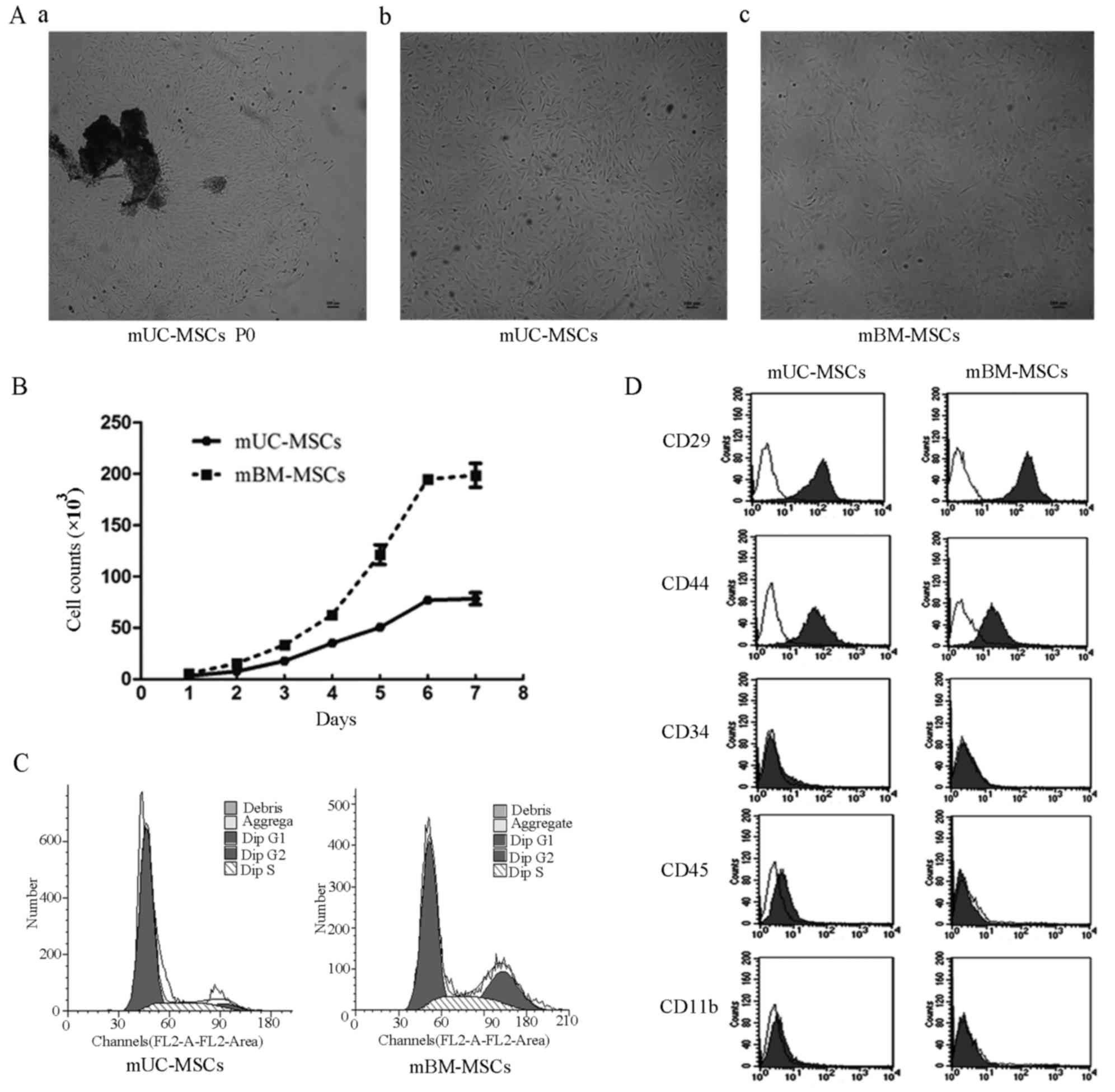 A novel method to isolate mesenchymal stem cells from mouse