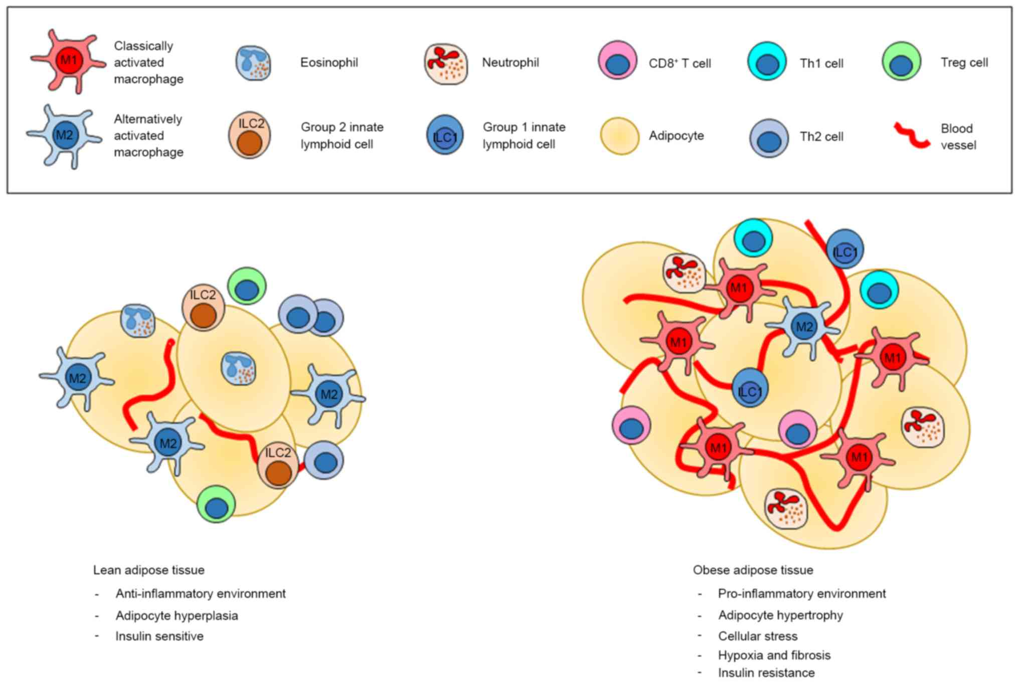 Role Of Innate Lymphoid Cells In Obesity And Metabolic Disease